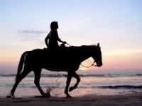 Si caii mor, de dor…