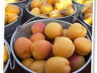 Dulceata de caise sau prune verzi